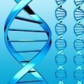 Talking genomics: experts and publics at DNA public dialogues and events