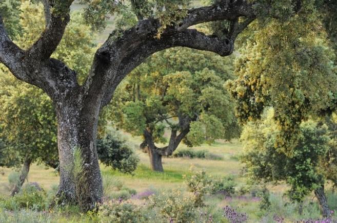 The Ethics of Ecological Restoration in Cultural Landscapes